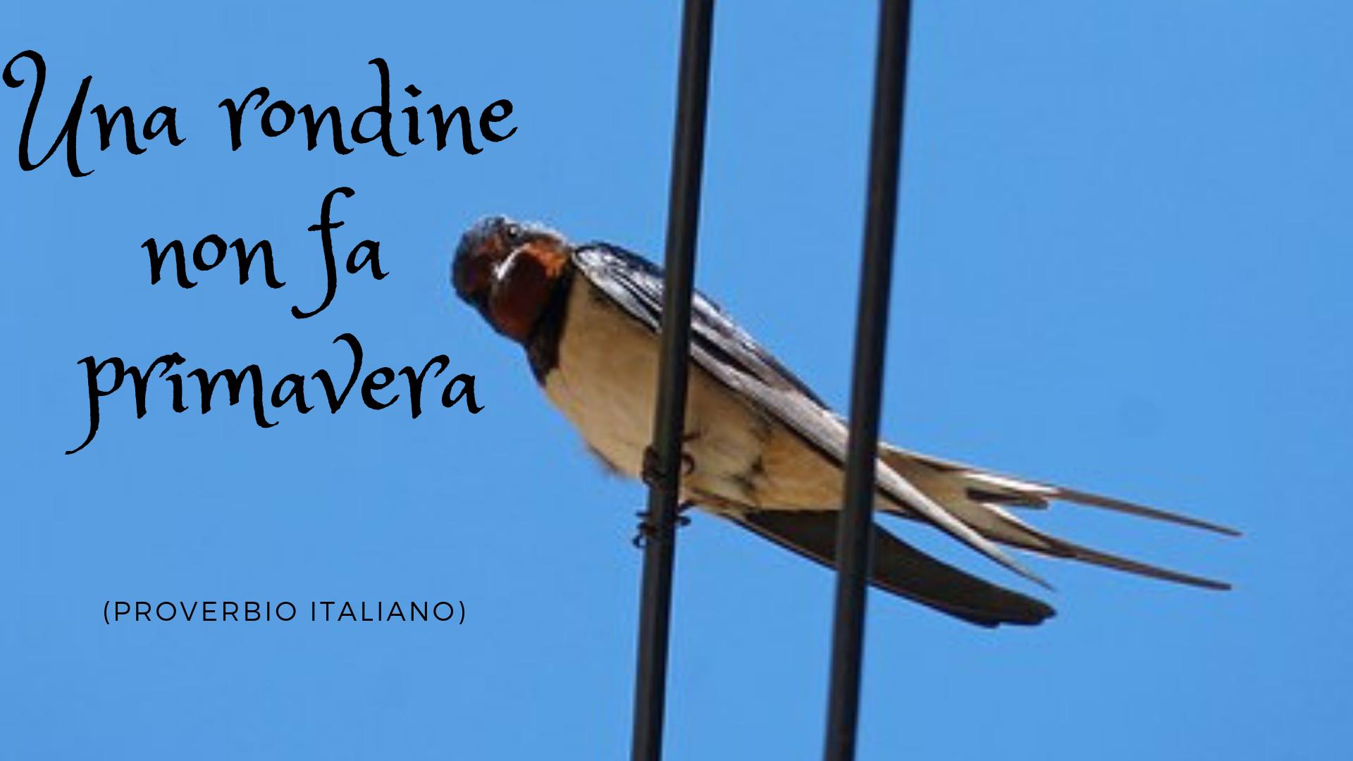 I Proverbi Italiani Scuole D Italiano Per Stranieri Societa Dante Alighieri